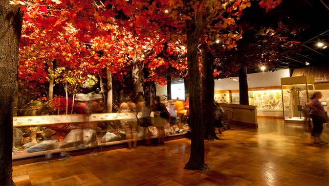 A forest display invites visitors to identify local plant and animal species.