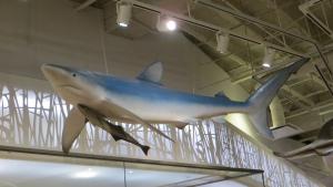 requin suspendu dans la Galerie Schad