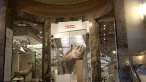 a rhinoceros at the entrance to the biodiversity gallery