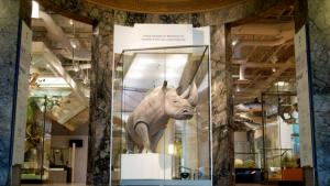notre rhinocéros blanc