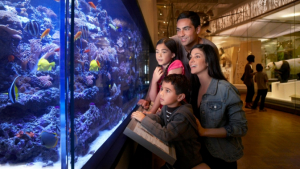 Famille regardant un grand aquarium