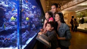 a family examines a large aquarium