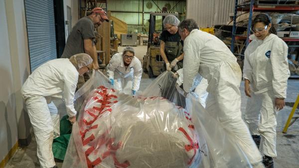 Il a fallu sept personnes pour soulever le cœur du rorqual bleu afin de l'emballer. Photo : Stacey Lee Kerr
