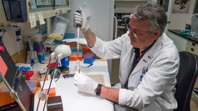 ROM technician Oliver Haddrath extracting a DNA sample from blue whale tissue. Photo by Connor McDowell