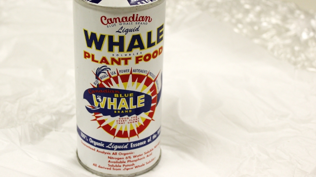 A photo of a canister of Canadian Blue Whale Brand Fertilizer - made from blue whale products in the 1950s. Photo by Katherine Ing