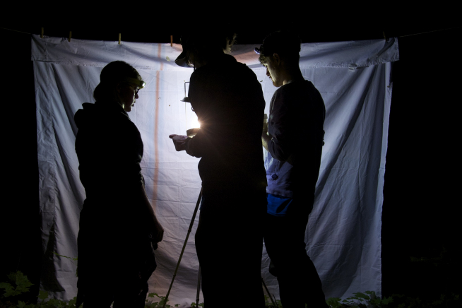 3 people in silhouette look for insects attracted to a light