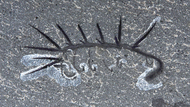 Fossilized Hallucigenia sparsa.