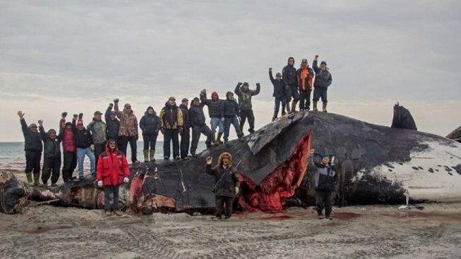 Inuit community standing on and near a recently hunted bowhead whale on beach