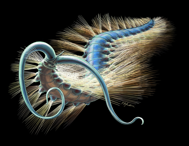 An artist reconstruction of Kootenayscolex barbarensis