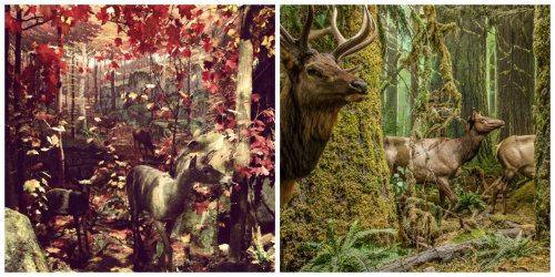 Behind the entrance to the Bat Cave, is this delightful diorama of deer in the forest. This reminded me so much of the forest diorama at The Royal British Columbia Museum.  Photos by Jaime Clifton-Ross (left) and Royal British Columbia Museum (right).