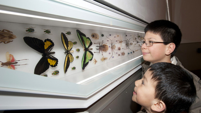 Two boys looking at a display of pinned butterflies