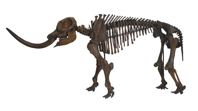 Mastodon