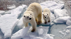 Mother and baby polar bear on ice