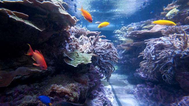 Admirez les innombrables poissons habitant notre récif de corail.