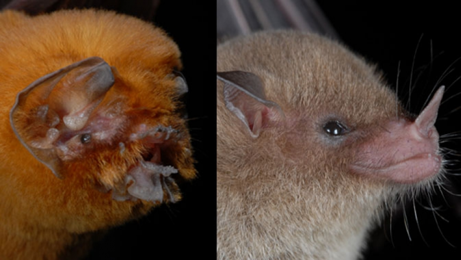 Not all bats are the same