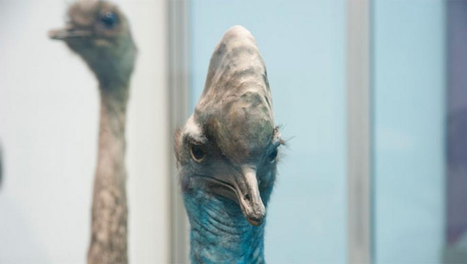 oiseaux d'une plume datant ne datant obtenir plus difficile après l'Université
