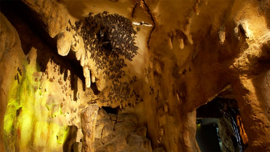 The Bat Cave at the ROM
