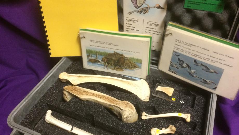 Specimens from the Bones & Environmental Adaptations EduKit