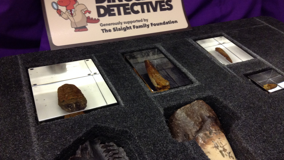 Fossils and casts from inside the Dinosaur Detectives EduKit
