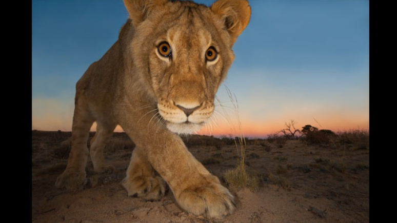 Curiosity and the cat © Hannes Lochner (South Africa)