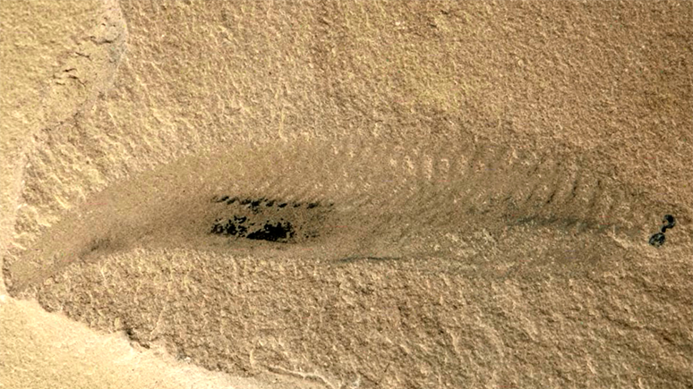 Photo of a fossil