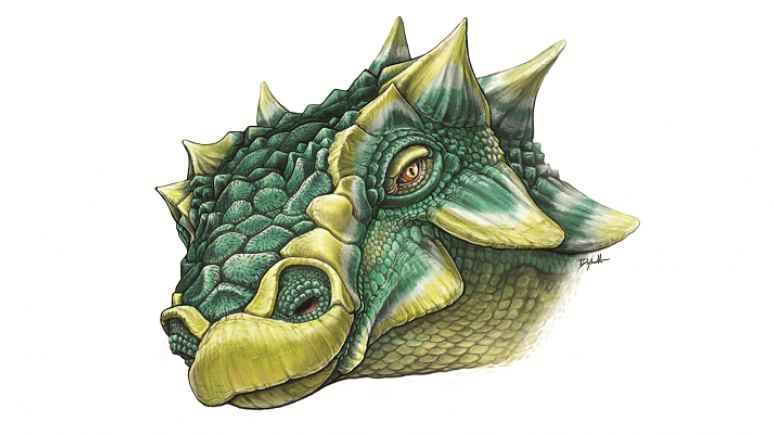 Sketch drawing of Zuul crurivastator's head