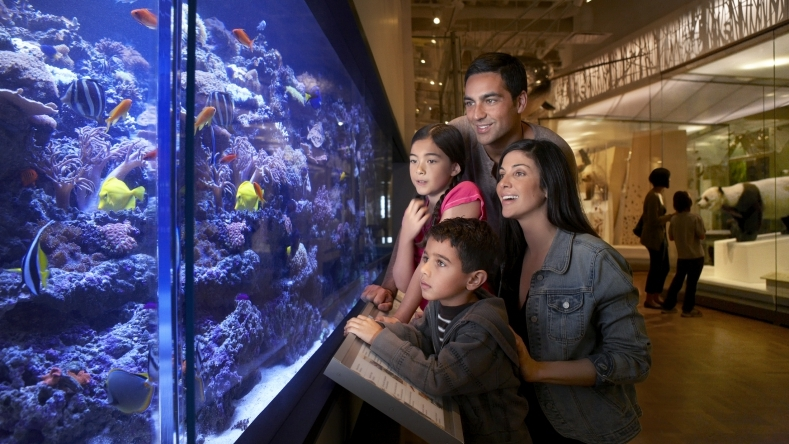 Photo of a family looking at an aquarium in the museum