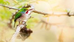 Bird resting in a tree.