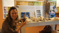 Kate at a touch table in the Hands-On Biodiversity Gallery, holding a T-Rex tooth from the Education handling collection