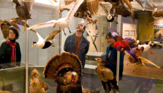 Visitors in the Birds Gallery
