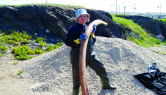 A photograph of a woman holding a bone of a blue whale.