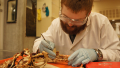 A volunteer cleans the remaining tissue from the Komodo Dragon skull