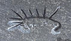 Fossilized Hallucigenia sparsa.