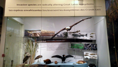 Photo of the ROM's Great Lakes display, featuring a Bald eagle, a Beaver, a Snapping turtle, and various other species