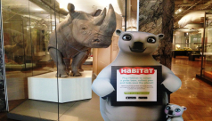 Polar bear characters from Habitat the Game stand next to Bull the Southern white rhino in the Schad Gallery