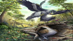 Cretaceous Bird-Like Dinosaurs