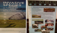 A poster containing information about invasive species produced by the Ministry of Natural Resources and GLIMRIS