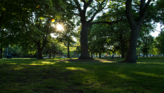 evening sunlight streams through the leaves and branches of the trees in Queen's Park, casting shadows on the green grass. Photo by Rhi More