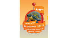 A cartoon image of a Blanding's turtle