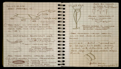 Pages from a puzzle-solver's notebook – piecing eurypterids back together … on paper.