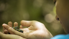 A young participant holds up a spotted salamander in their hands for closer inspection. Photo by Tallie Garey.