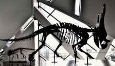 Photo of a dinosaur fossil in the museum