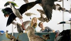 Galerie des oiseaux