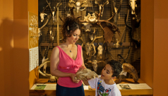 Patrick and Barbara Keenan Family Gallery of Hands-on Biodiversity
