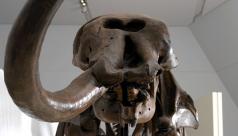 Galerie Reed de l'âge des mammifères