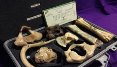 Des spécimens d'os provenant de l'ÉduKit Des os dans le sol