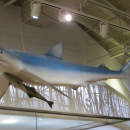 a shark overhead in the Schad gallery