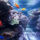 fish swim in a coral reef aquarium