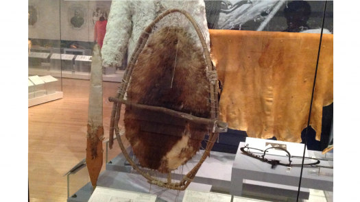 a beaver pelt stretched on a wooden frame
