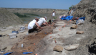 The Southern Alberta Dinosaur Project team dig in a bonebed.